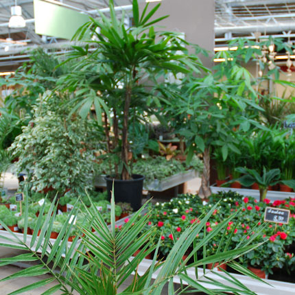Sporkmann Topfpflanzen